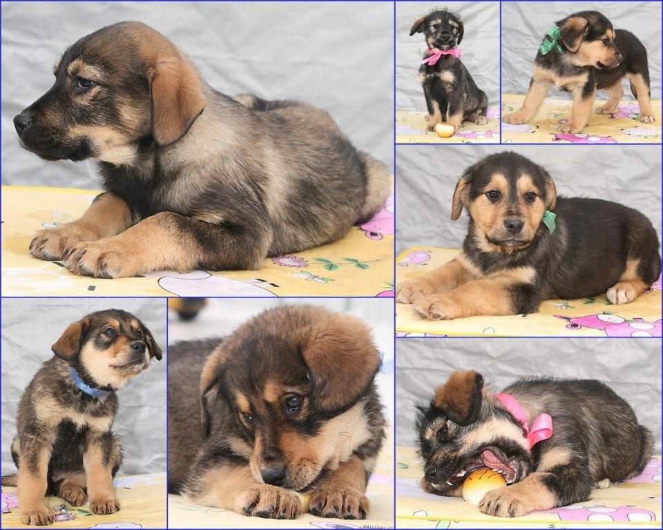 5 вариантов, как узнать породу собаки и щенка по внешнему виду
