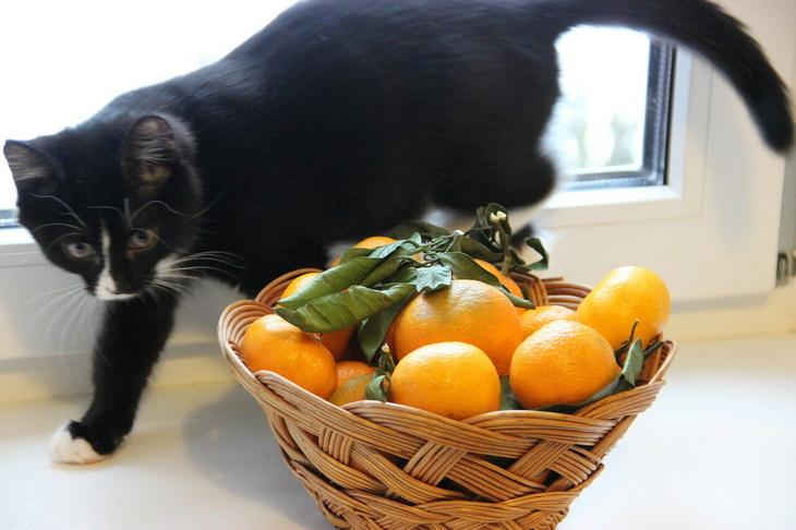 Какой запах отпугивает кошек: 7 народных методов + топ 5 товаров