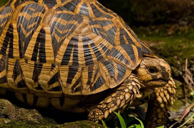 Обзор видов домашних черепах