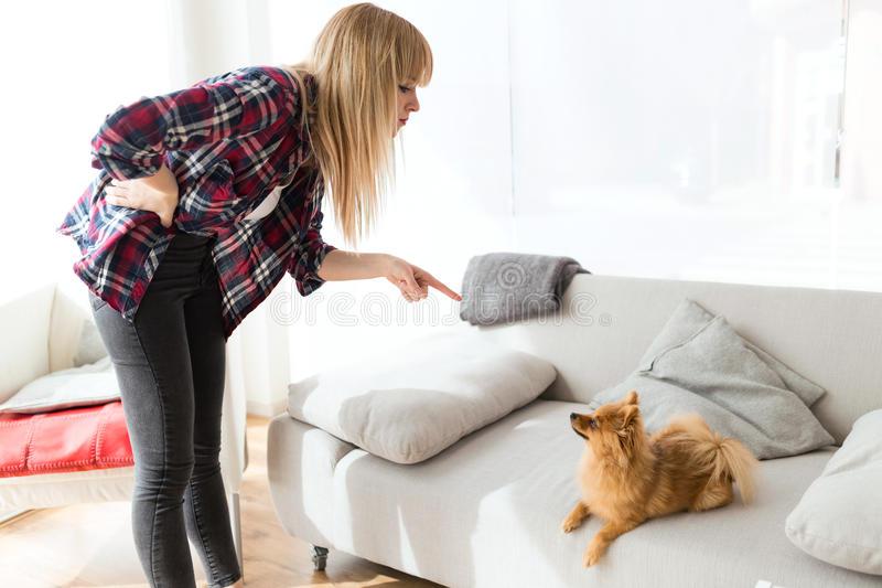 Как наказывать собаку за непослушание, то что гадит дома, агрессию правильно, если она убегает, за укус