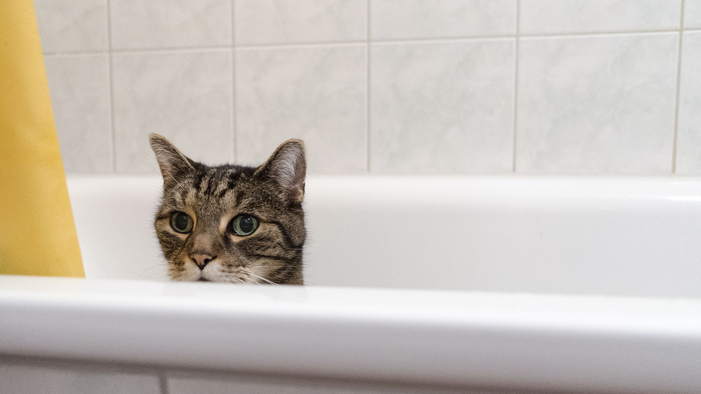 Почему кошки боятся воды и не любят купаться