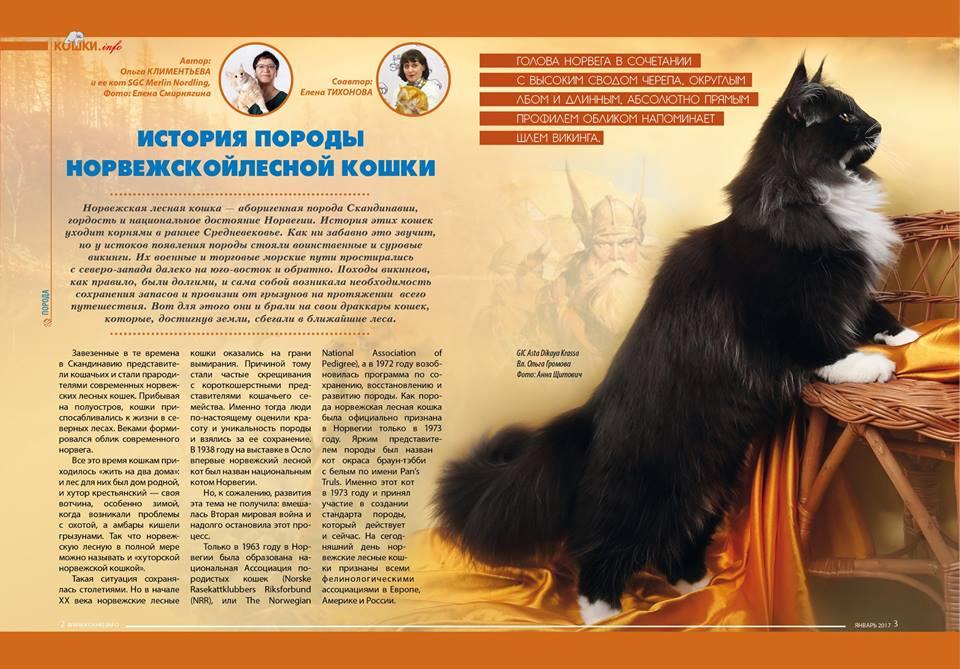Норвежская лесная кошка (120 фото): описание породы, характер, внешний вид, особенности содержания в домашних условиях