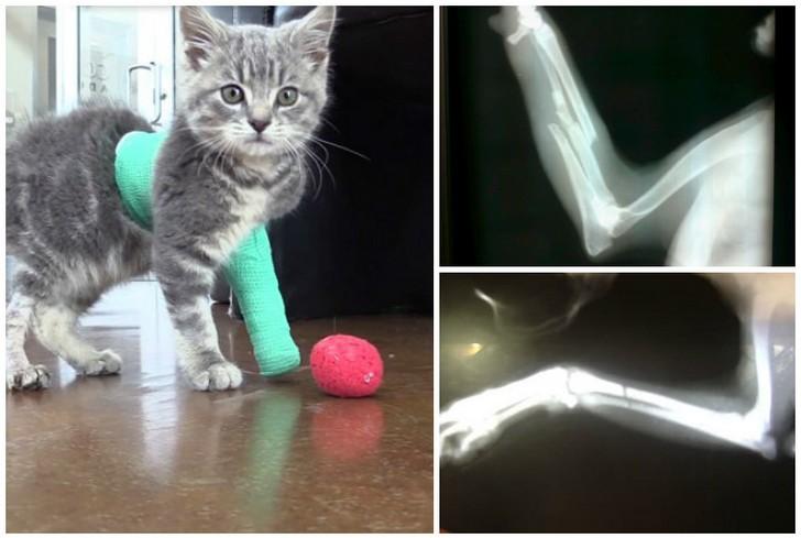 Симптомы челюстных травм у кошек   лечение переломов челюсти в нижнем новгороде