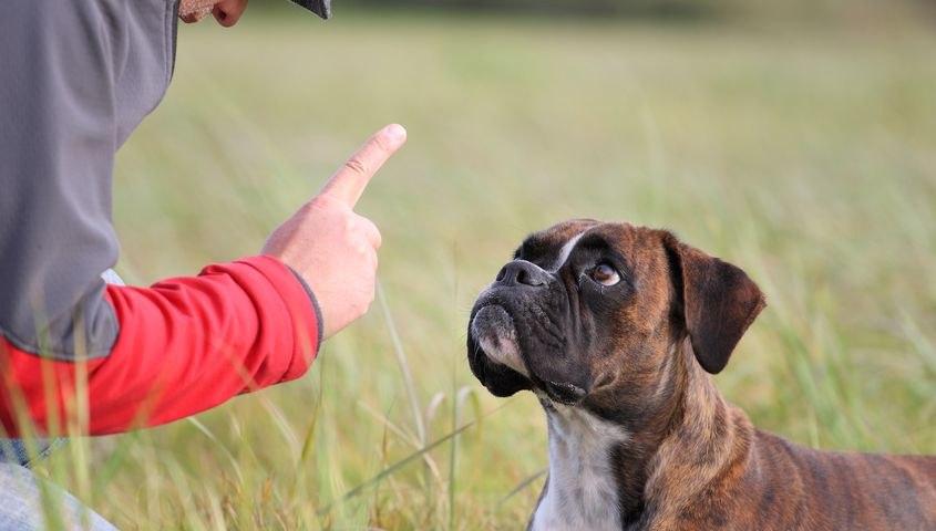 Что делать, если собака кусается и рычит на хозяина?