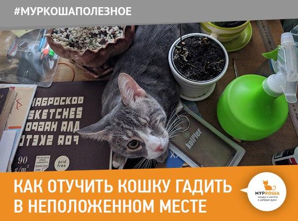 Как отвадить кошек от подъезда чтобы не гадили народными средствами