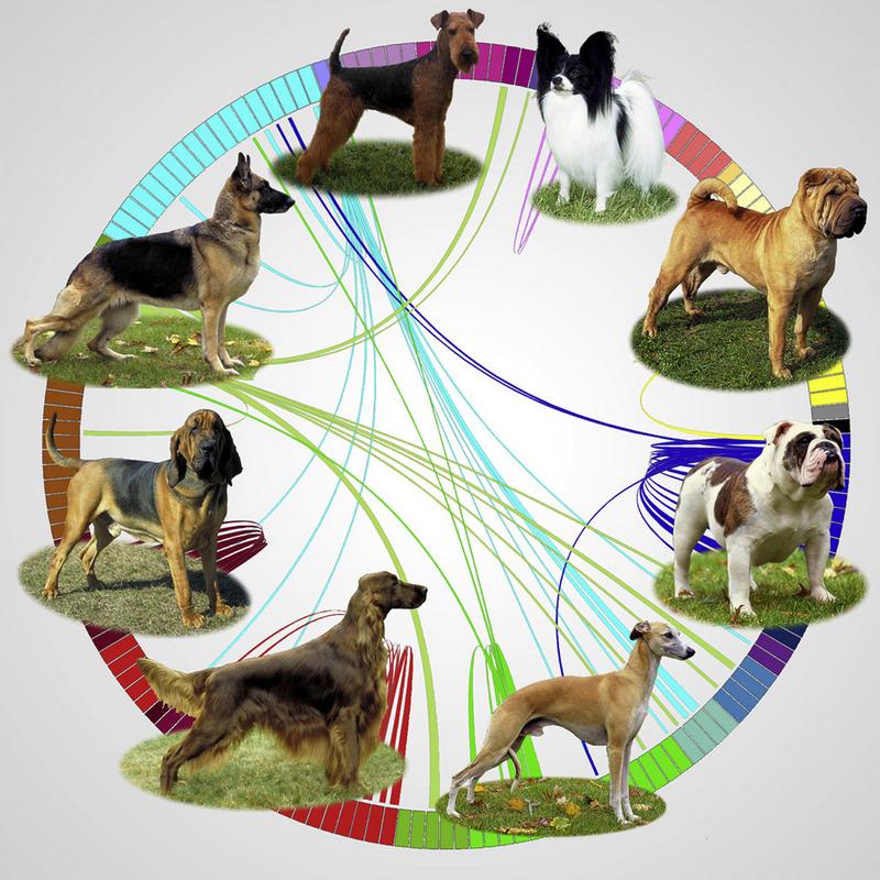 Сколько пород собак существует в мире — можно ли определить точное количество