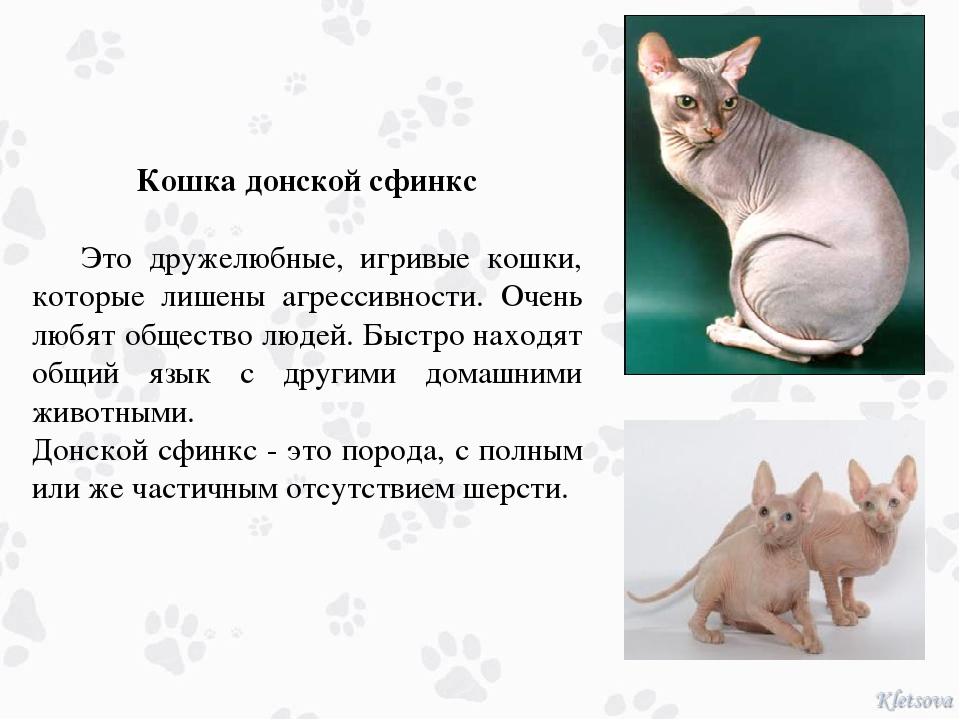 Порода кошек донской сфинкс: 110 фото и описание характера кошек
