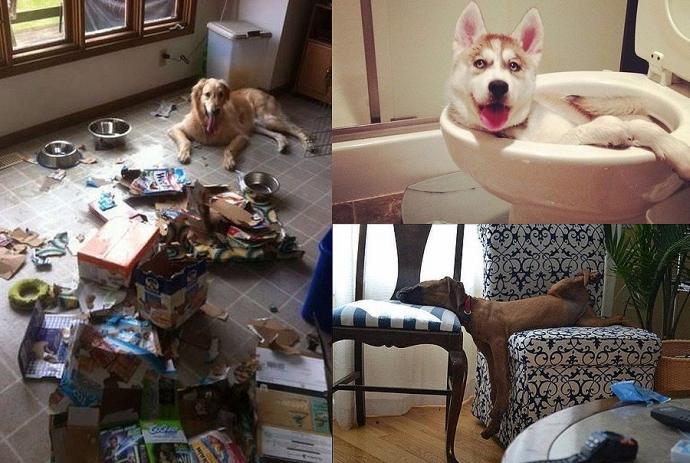 Как снять квартиру с собакой или кошкой: аренда квартиры, если у вас питомец - недвижимость - журнал домклик