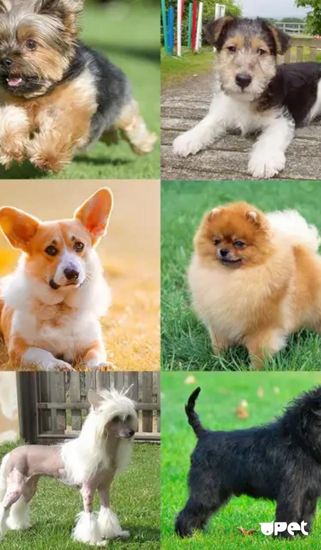 Топ-11 недорогих пород собак
