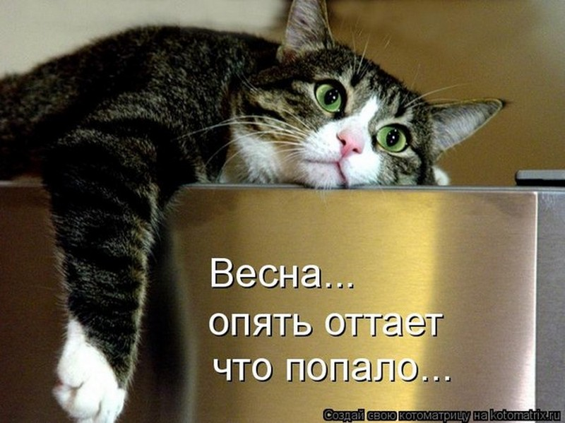 9 признаков, почему кошка грустит: причины
