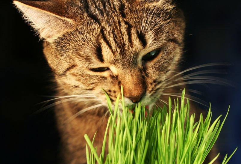 Какую траву любят есть кошки - 6 видов