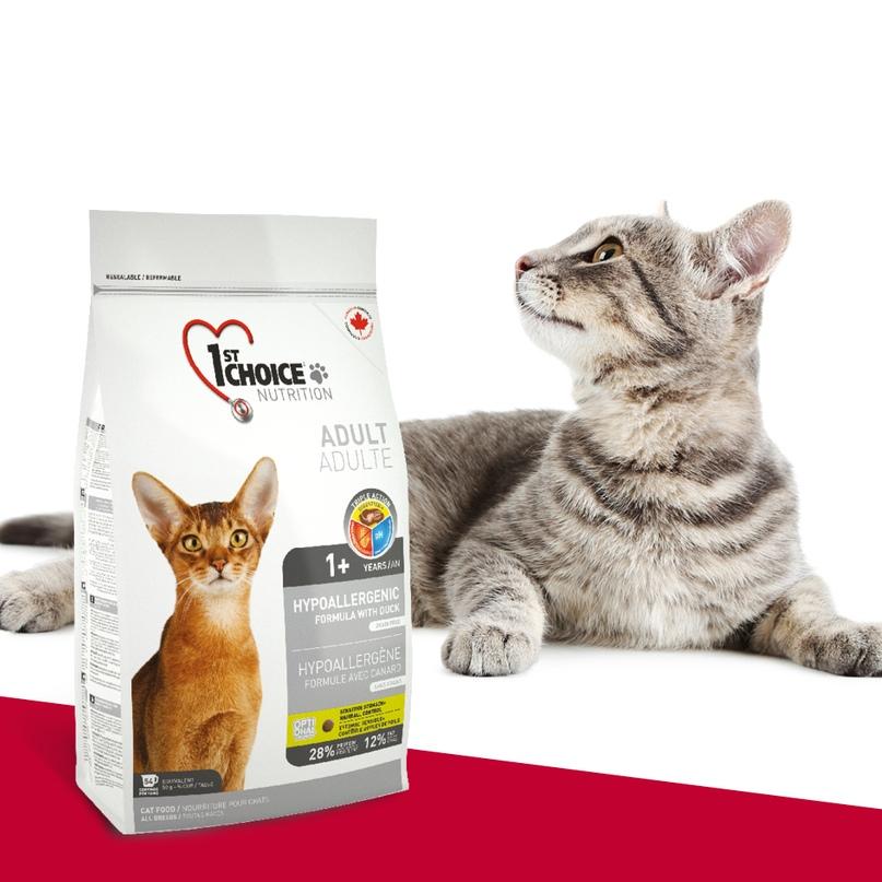 Корм для кошек 1st choice («фест чойс»): отзывы ветеринаров и владельцев животных, состав и ассортимент, преимущества и недостатки