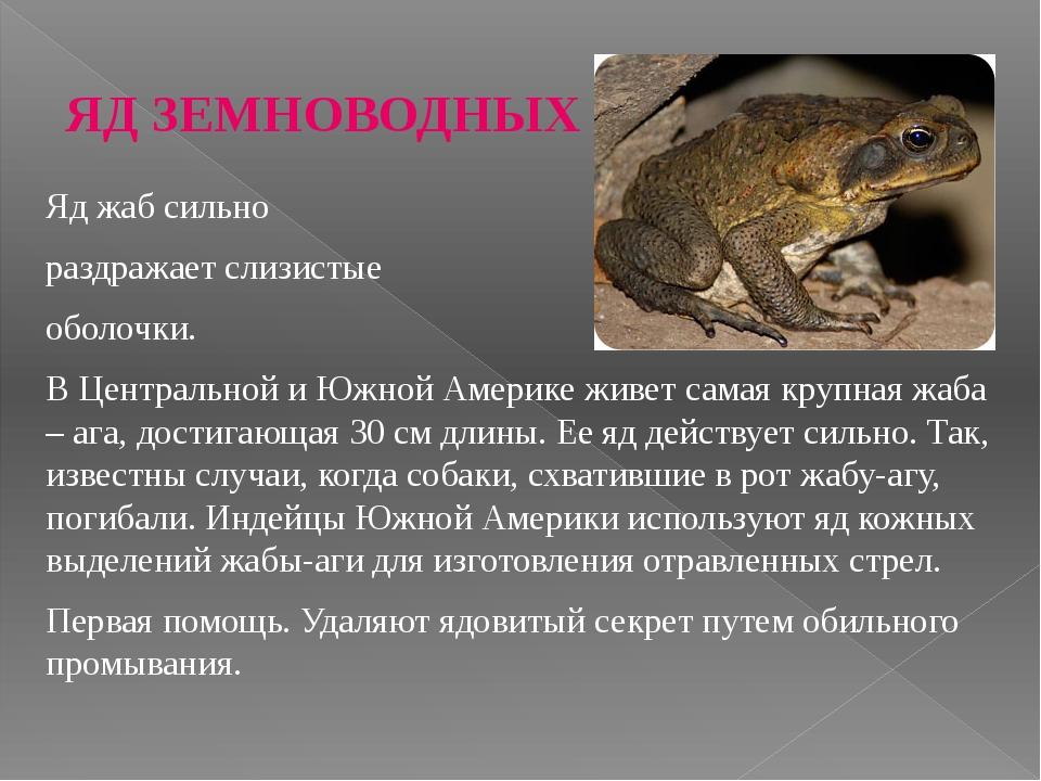 Жаба животное. описание, особенности, виды, образ жизни и среда обитания жабы