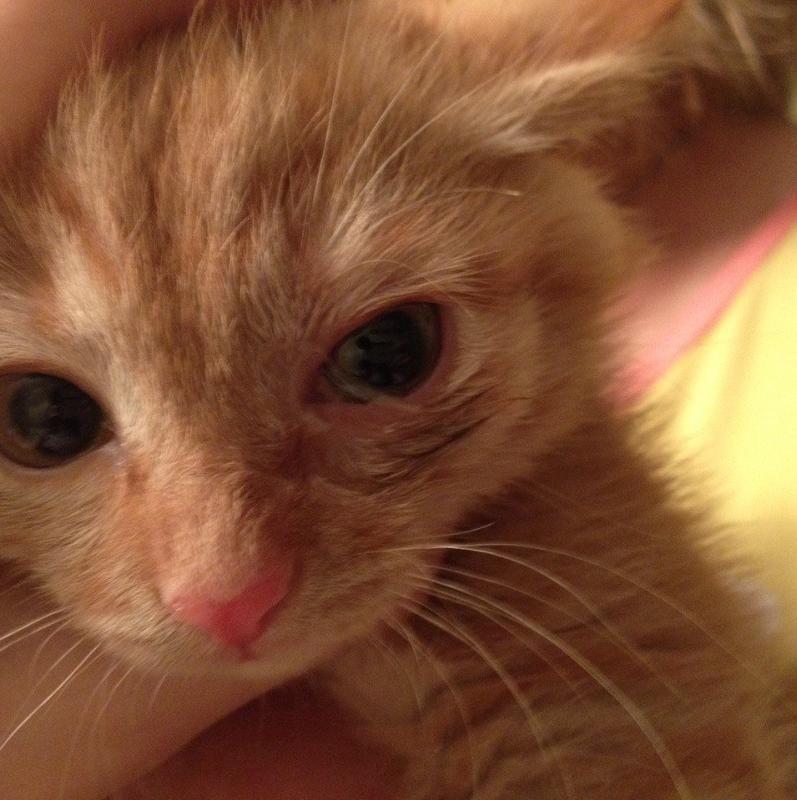 Как вылечить конъюнктивит у кошки?