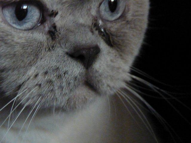 Почему у котят слезятся глаза и что с этим делать