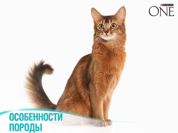 Злая кошка: у какой кошки самый плохой характер