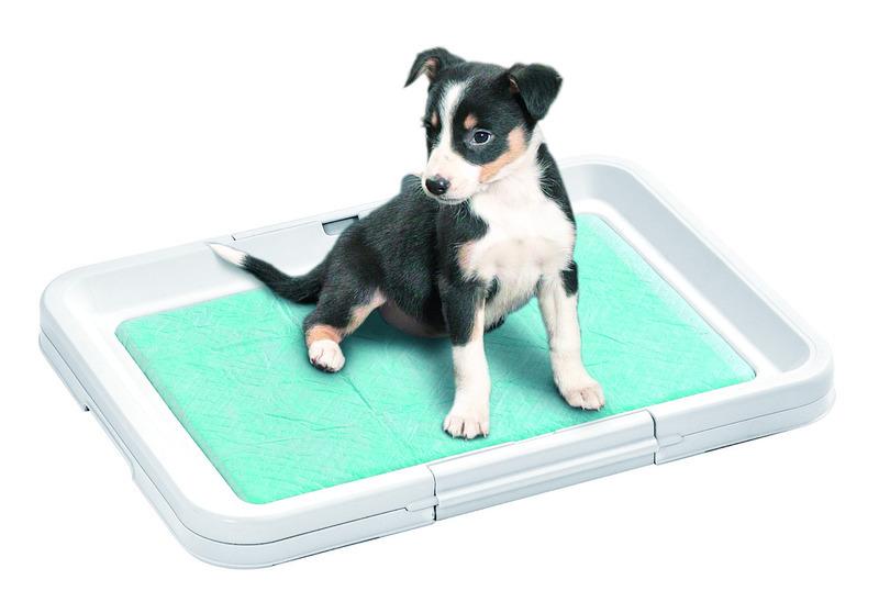 Как приучить собаку к пеленке? - клуб любителей породы джек-рассел-терьер