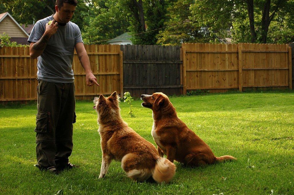 Как научить собаку команде «лежать»