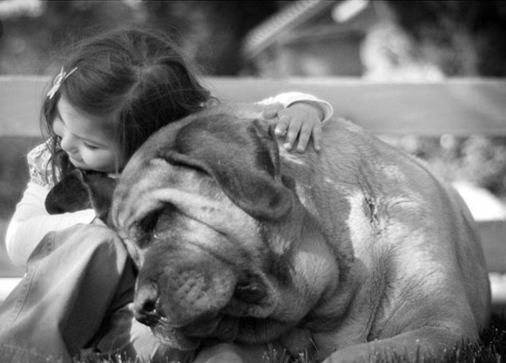 ???? семь лучших пород собак для тех, кто работает весь день - 2021