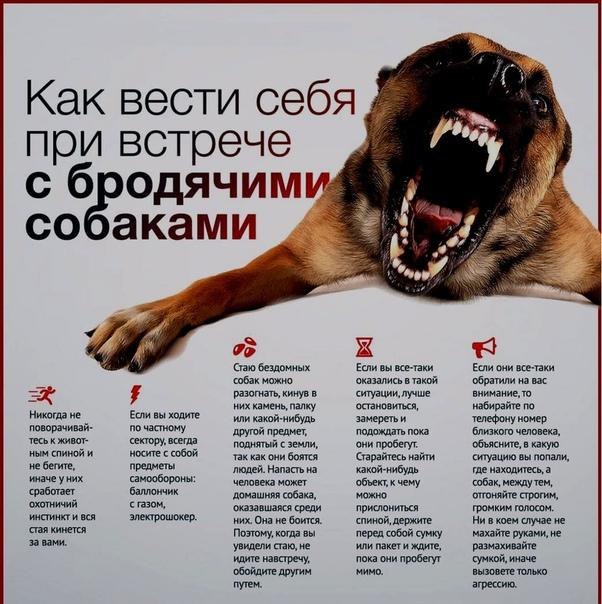 Собачий закон: почему государство не защищает россиян от бродячих псов