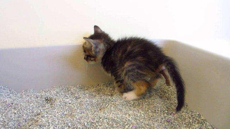 Почему кошка ходит хвостом за хозяином