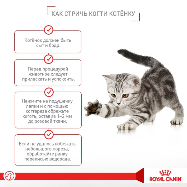 У беременной кошки глисты: что делать, как вывести, что дать и можно ли их травить