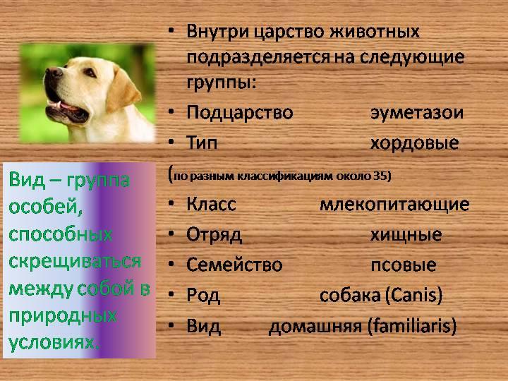 Как лечится бельмо на глазу у собаки