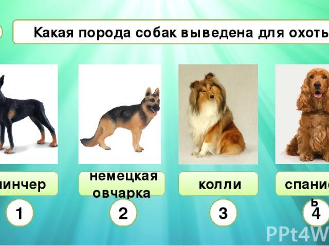 Сколько существует пород собак в мире?