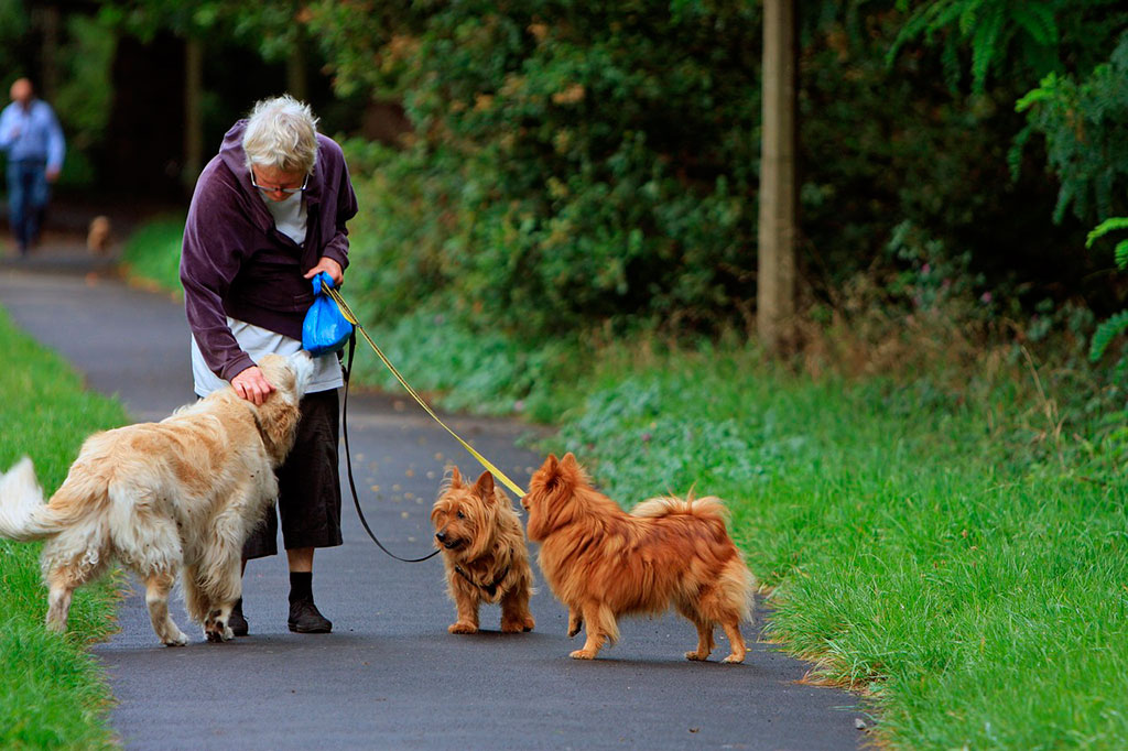 ᐉ как часто нужно гулять с собакой? - ➡ motildazoo.ru