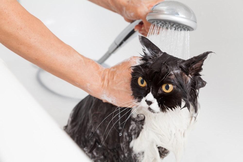 Как правильно мыть кошку и кота, как часто можно купать