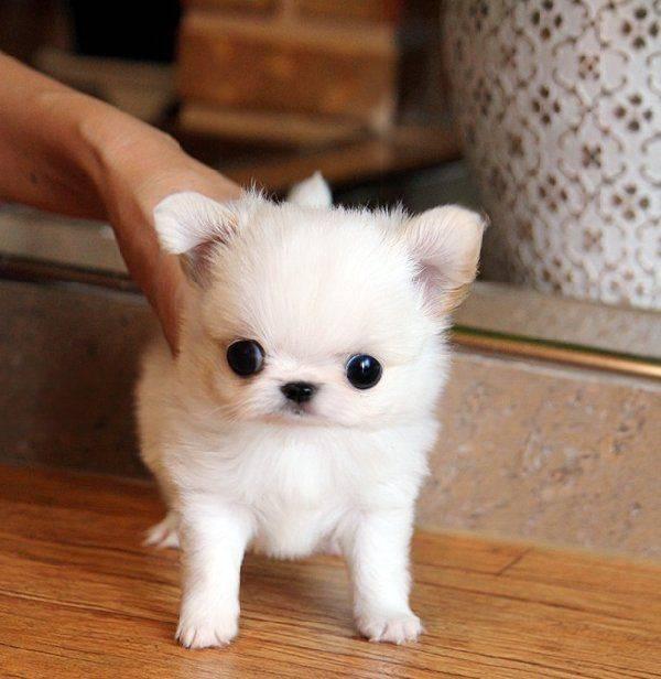 Породы собак небольших размеров