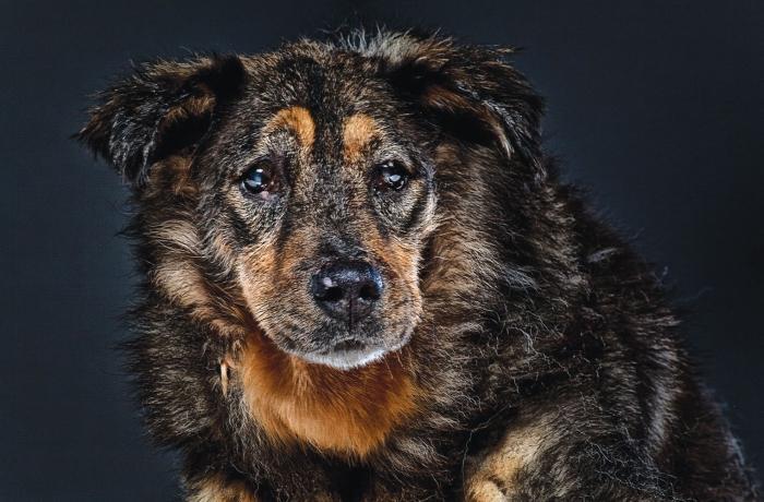 Сколько лет живут собаки. таблица по породам