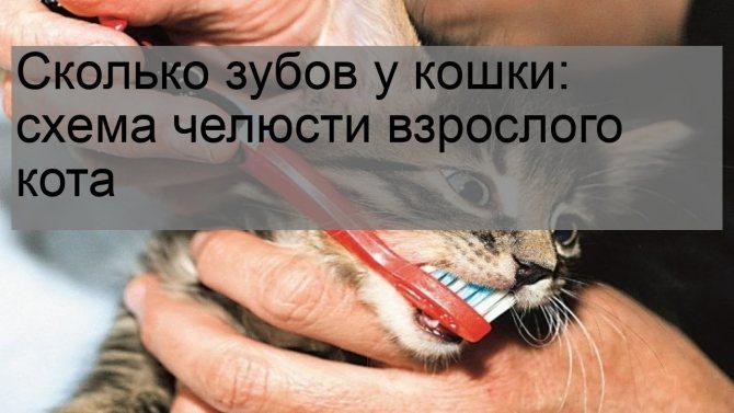 Течка у кошек: что нужно об этом знать