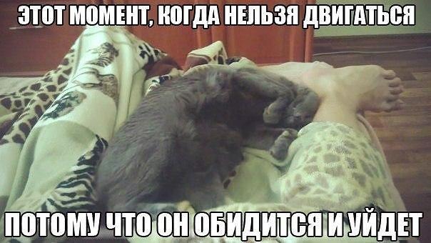 Кошка недает спать ночью: решаем проблему