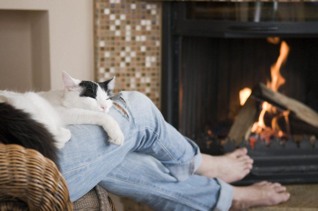 ᐉ люди которые не любят кошек ответ психолога – любящие коты - zoomanji.ru