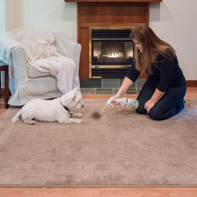 Как вывести запах собачьей мочи с дивана и отмыть пятна, если собака написала: возможно ли убрать народными средствами в домашних условиях?