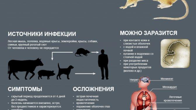 Чем можно заразиться от кошки человеку - wlcat.ru