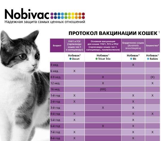 Первая прививка котёнку: правила и противопоказания. когда и какие прививки делать котятам