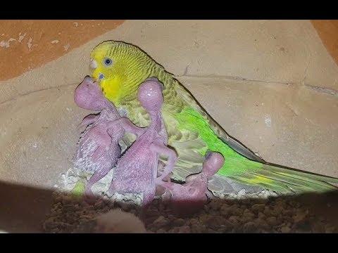 Что делать, если пернатый питомец боится хозяина: как наладить отношения с попугаем