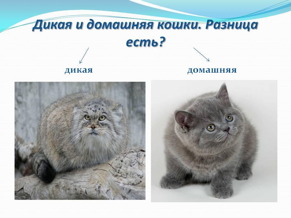 Как отличить домашнюю кошку от бездомной