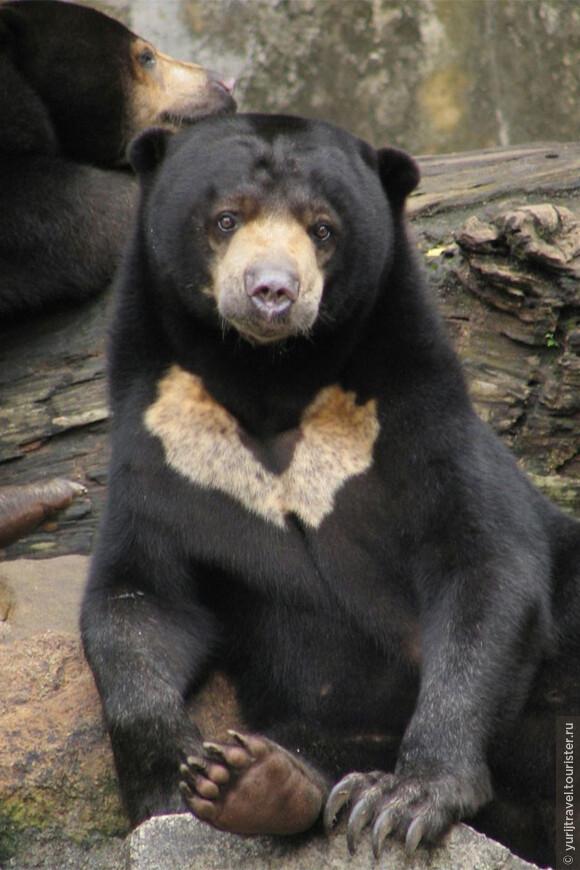 Животное медведь: все виды, где живет, чем питается, враги, размножение, интересные факты