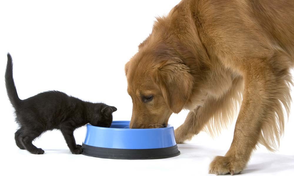 Как правильно кормить кота из шприца?