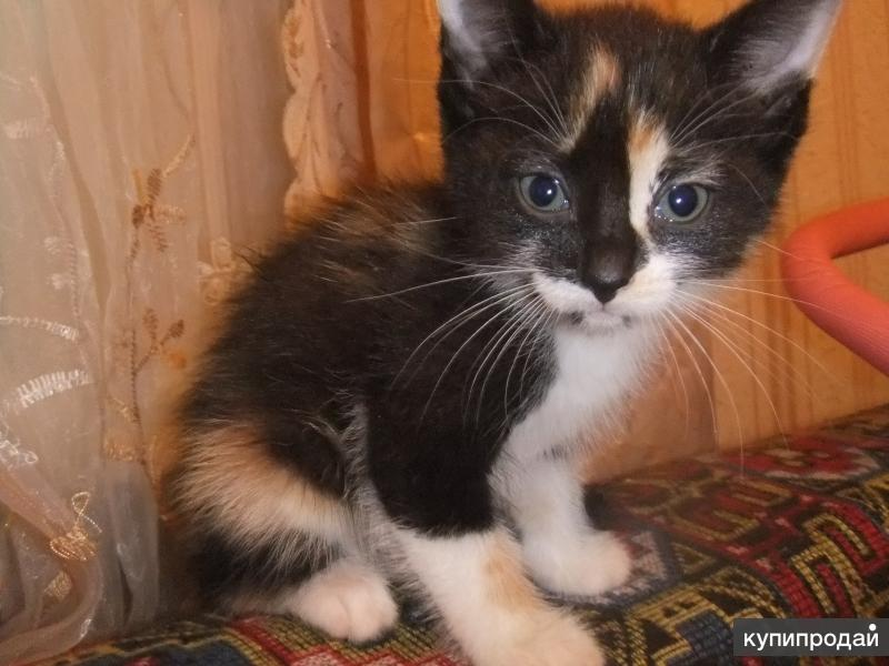 Имена и клички для кошек: как назвать котёнка девочку рыжего, чёрного, серого, белого или других окрасов