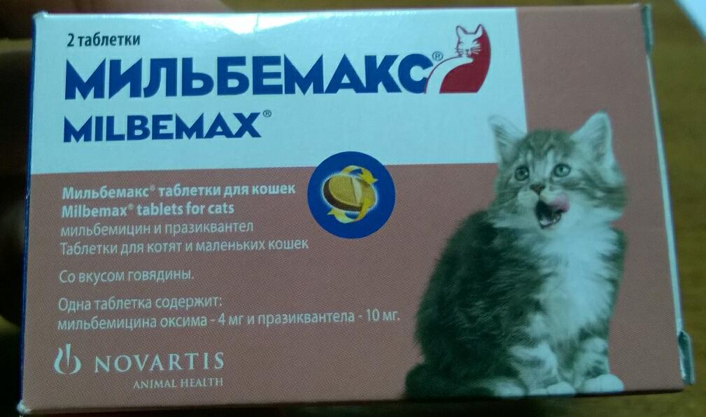 Глисты у беременной кошки: симптомы, лечение, аптечные препараты