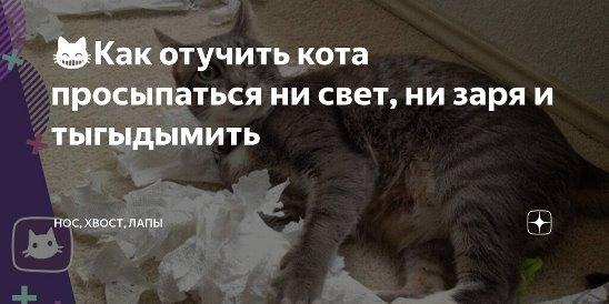 Чем обработать место, где гадит кошка, чтобы больше не гадила