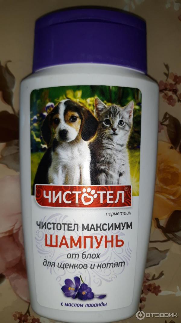 ???? как выбрать лучший шампунь от блох для кошек