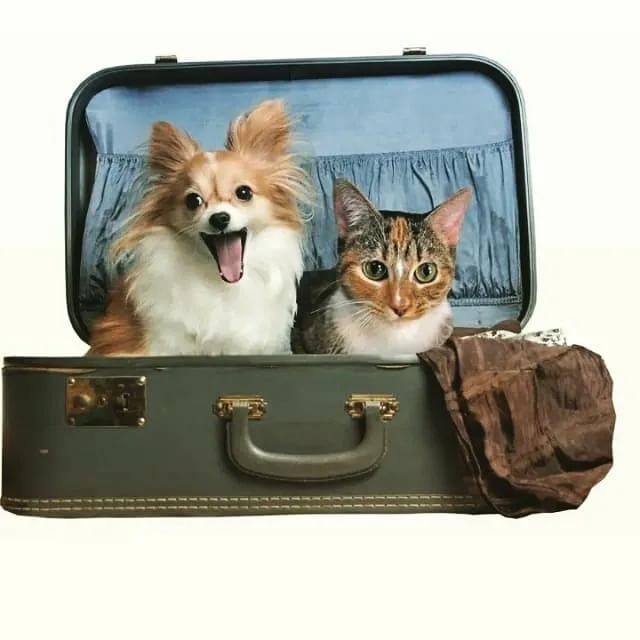 Где оставить животное на время поездки
