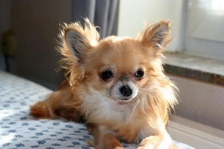 Маленькие породы собак (66 фото): названия и описание самых мелких собачек в мире, выбор домашних собак небольшого размера