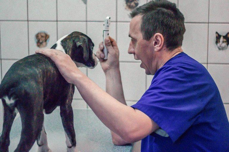 Как правильно чистить уши собаке: советы владельцам