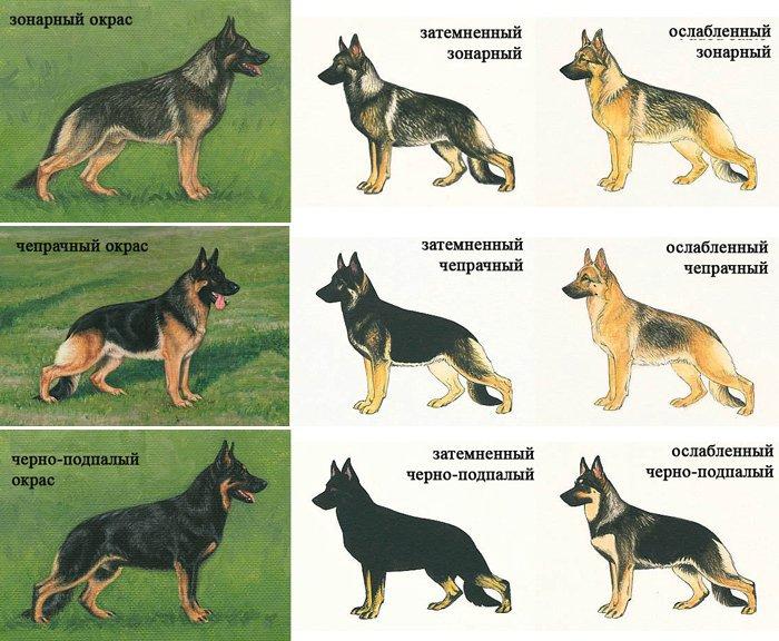 Как узнать породу собаки и обеспечить ей правильный уход?